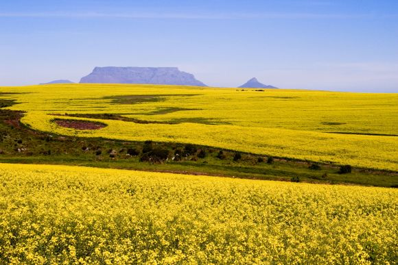 Table_Mountain_in_Spring_2_580_387_80_s